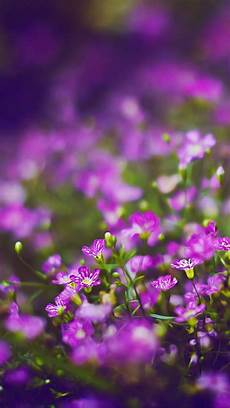 iphone wallpaper nature flowers beautiful purple flower field blur bokeh iphone 6