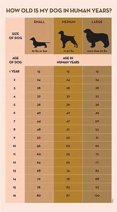 Puppy Age Chart Your Dog S Age In Human Years A Conversion Chart Dogs