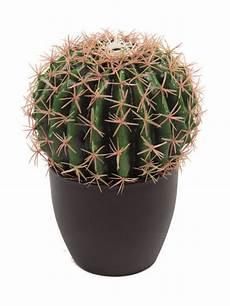 pianta grassa da interno pianta grassa bag cactus a domicilio pianta da interno