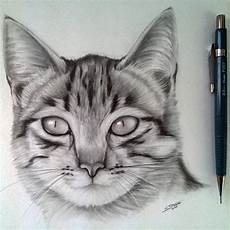 Cat Drawing Images Cat Drawing By Lethalchris On Deviantart In 2020 With