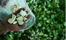 cucinare cocaina la coltivazione di coca in colombia 232 triplicata negli