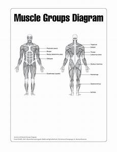 Human Muscle Chart Templates At Allbusinesstemplates Com