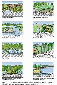 Cowardin Classification Chart Wetlands And Topography Envirothon Earth Science Ecology
