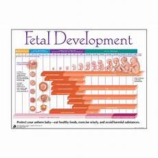 Pregnancy Timeline Chart Fetal Development Chart Superior Medical