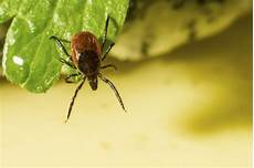 Small Light Brown Bug How To Identify Small Brown Bugs In A House Hunker