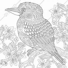 coloring pages for adults kookaburra bird australian
