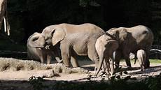 Malvorlage Afrikanischer Elefant Gratis Fotos Afrikanischer Elefant