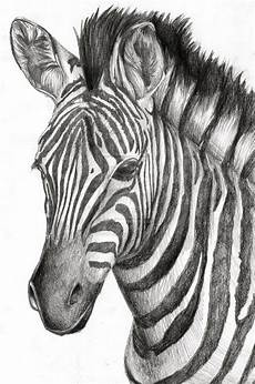 Picture Drawing Zebra By Ilovedragons1 On Deviantart Pencil Drawings Of