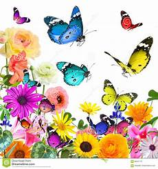 Mariposas Y Flores Flores Y Mariposas Hermosas Coloridas Aislado En Blanco