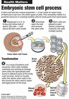 Cell Processes Is Stem Cell Research Ethical Craigdailypress Com
