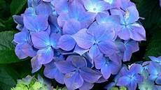 blumen malvorlagen jepang 10 bunga termahal di dunia