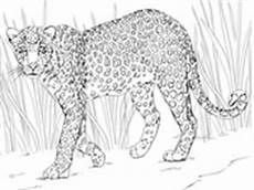 Ausmalbilder Kostenlos Afrikanische Tiere Ausmalbilder Kostenlos Afrikanische Tiere X13 Ein Bild