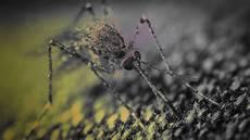 Eee Virus Eee Mosquito Virus Maps States Symptoms Protect Yourself