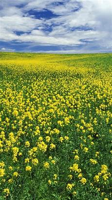 flower meadow iphone wallpaper 640x1136 beautiful yellow flower meadow iphone 5 wallpaper