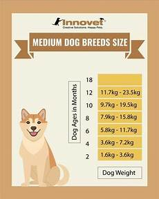 Spaniel Growth Chart Puppy Growth Chart By Month Amp Breed Size With Faq All