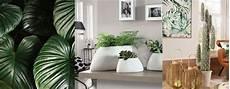 interno casa l oca nera 5 idee per arredare casa con le piante da interno