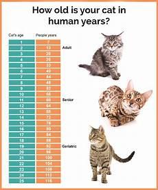 Baby Kitten Age Chart Cat Age Chart Naturpet