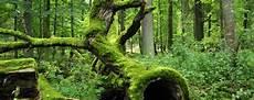 Malvorlagen Urwald Europa Bialowieza Urwald Erbe Der Menschheit Bedroht Robin Wood