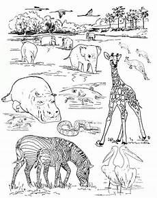 ausmalbilder tiere im zoo kostenlos malvor