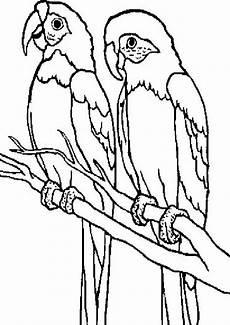 ausmalbilder papagei malvorlagentv