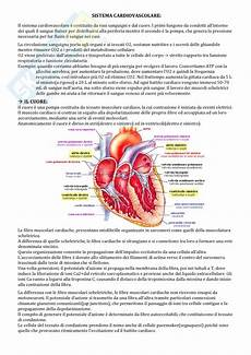 cuore e vasi fisiologia 4 cuore e vasi
