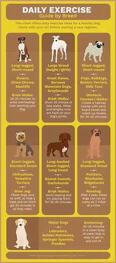 Puppy Exercise Chart How To Keep Your Pet Healthy All Year Round Rounding