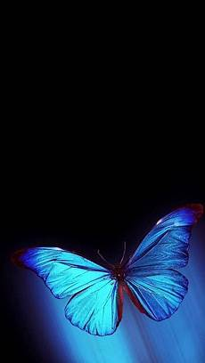 wallpaper iphone free butterfly 1080x1920 blue wallpapers windows central forums