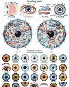 Iridology Diagnosis Chart What Is Iridology Eye Chart Diagnosis Iriscope