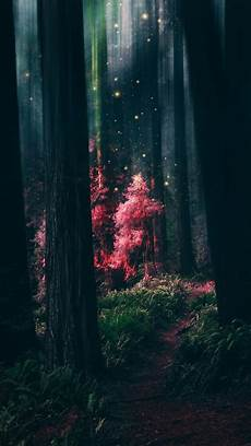 nature magic iphone wallpaper magical forest forest wallpaper nature wallpaper