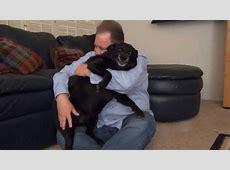 Vicious Dog Does Kevin Hart's SNL Z Shirt Skit   YouTube