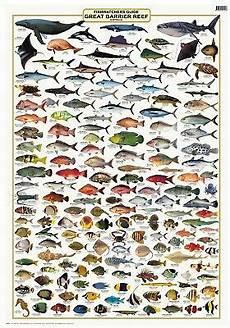 Reef Fish Identification Chart Australian Fish Identification Great Barrier Reef
