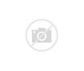 """Image result for """"whitelined-sphinx-moth"""""""