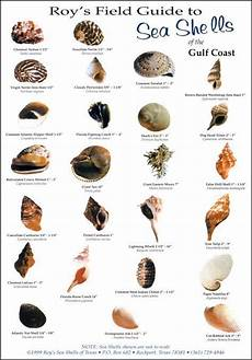 Shellfish Chart Image Result For Shell Identification Chart Pacific Coast