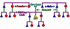 Kinship Chart Generator Online Kinship Chart Generator Real Naturist Families