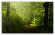 4k desktop wallpapers nature beautiful nature image green forest ultra hd desktop