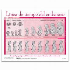 Pregnancy Timeline Chart Timeline Of Pregnancy Tear Pad Spanish Childbirth Graphics