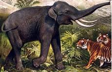 Malvorlage Indischer Elefant File Indischer Elefant Jpg