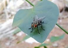 Common Household Pests Common Household Pests And A Few Ways To Get Rid Of Them