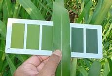 Plant Color Chart About Leaf Color Chart Lcc