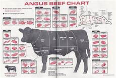 Beef Cuts Chart Beef Charts Johnny Prime