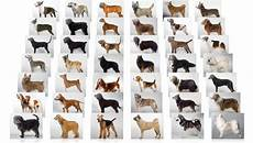 Dog Name Chart How Statistics Abuse Make Us Lazy Biased Misinformed And