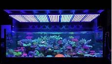 Best Aquarium Lights Best Reef Aquarium Led Lighting Photos Gallery Orphek