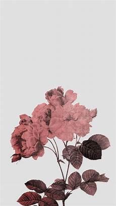 aesthetic flower desktop wallpaper 1193 best lockscreens images on background