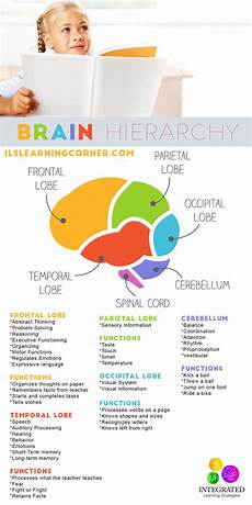Whole Brain Child Ages And Stages Chart Brain Hierarchy When Your Child S Lower Brain Levels Are