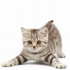 1000 images about kittens on