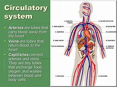 Circulatory System Organs Functions Of The Circulatory System Oben Science 7e