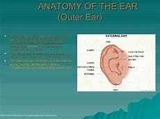 The Human Ear Final