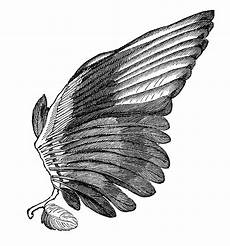 Drawing Of Angel Wings Angel Wings Clip Art Images Illustrations Photos