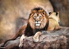 King Of The Jungle Designs King Of The Jungle High Res Stock Photo Getty Images