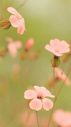 iphone wallpaper nature flowers wallpaper iphone 5 in 2019 flowers vintage flowers